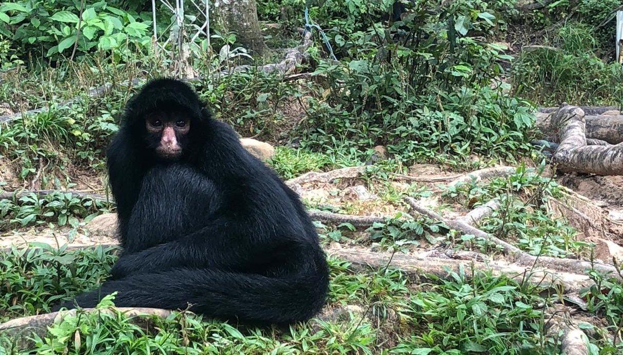 Centro de proteccion animal Bolivia